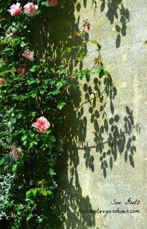 IMG_0391 webrose shadows