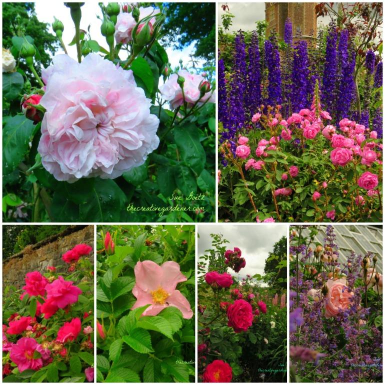 rose collage again