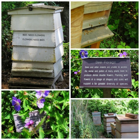 bee-forage