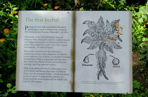 IMG_3352 ifirst herbal book sign.jpg