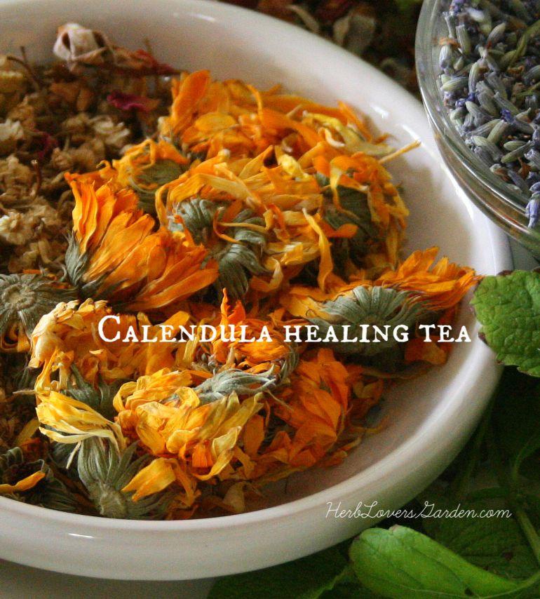Calendula healing tea